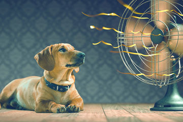 Five Ways to Slash Your Air Conditioning Bill